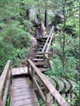 Ocean rain forest trail in Tofino BC